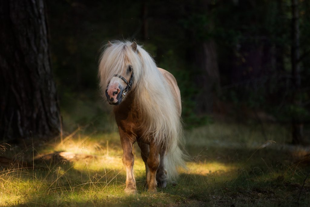 Hästfotograf-tussochtass-1