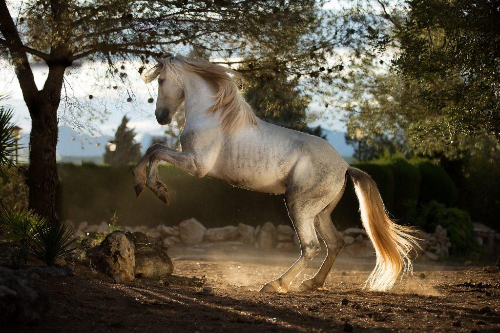 Hästfotograf-tussochtass-6