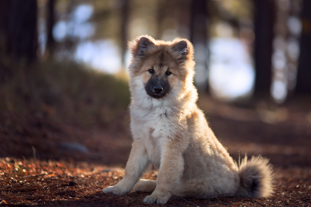 Hundfotograf-tussochtass-3