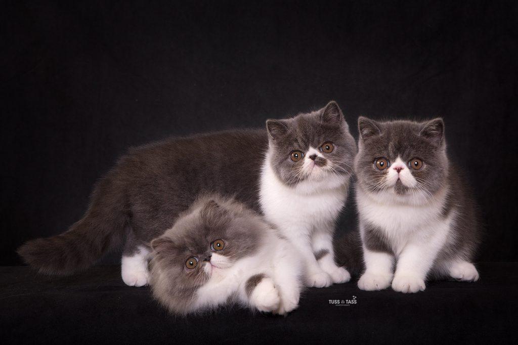 Kattfotograf.tussochtass-1